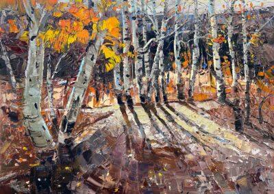 Back lit aspen trees in fall.